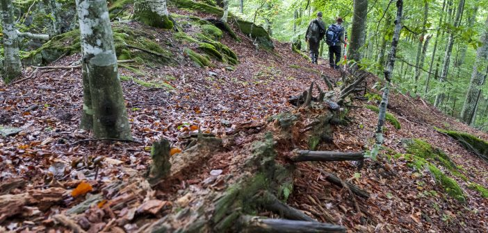 FORESTRY RESEARCH INSTITUTE RAISING AWARENESS ON IMPORTANCE OF FORESTS FOR HUMAN LIFE